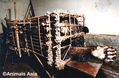 sAAF_Panyu_bears_HuizhouFarm_1995