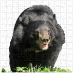 2012_Jigsaw-100